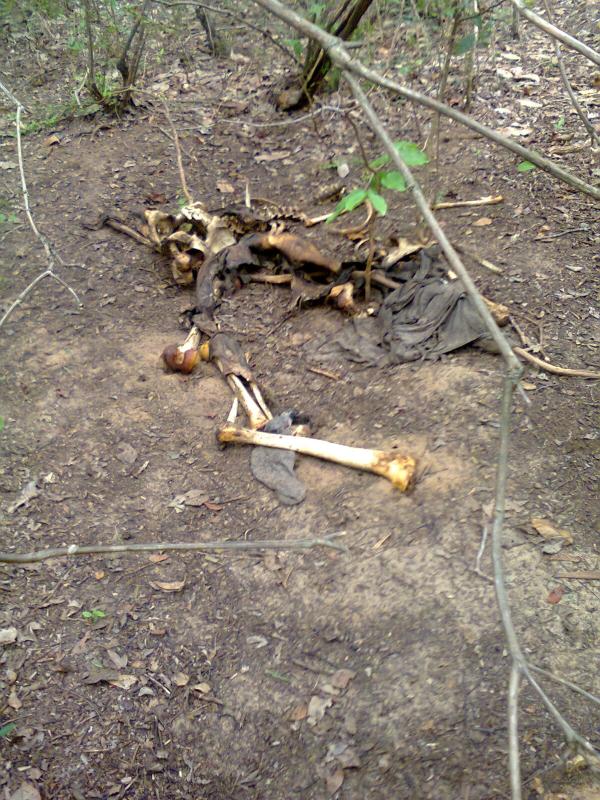 Corpo de homem é encontrado em mata fechada