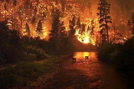 Incêndio florestal foi provocado por garotas que queimavam formigas com lente de aumento