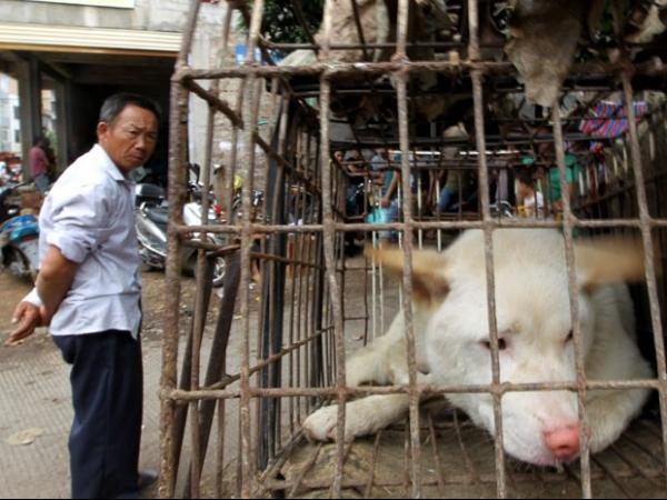 Festival que incentiva consumo de carne de cães gera polêmica na China