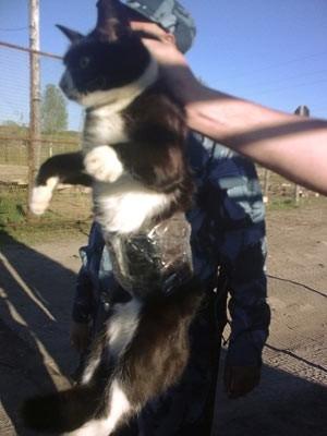 Flagra! Polícia prende gato que levava celulares para prisão na Rússia; foto