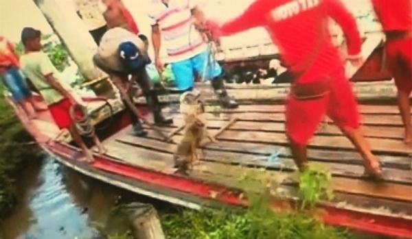 Novas imagens mostram cães amordaçados e mortos após ?limpa? de prefeitura no Pará