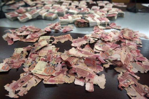 Formigas destroem quase R$ 140 mil que chinesa guardava em casa