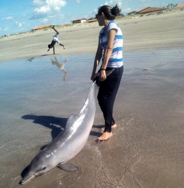 Golfinhos são encontrados mortos por banhistas na praia de Atalaia, no Piauí