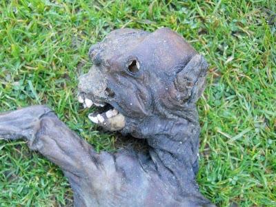 Criatura estranha achada morta assusta moradores na África do Sul