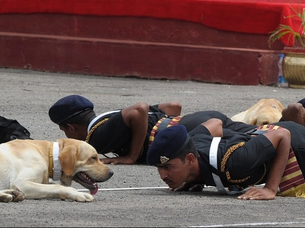 Exército indiano deita no chão com cachorros treinados durante evento