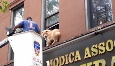 Bombeiro usa guloseimas e até água em tijela para resgatar cão de prédio