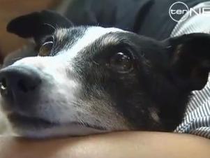 Australiano salva cachorro com respiração boca-a-boca e vira herói