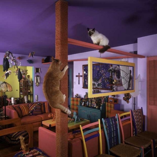 Casal cria condomínio exclusivo de luxo para gatinhos nos EUA