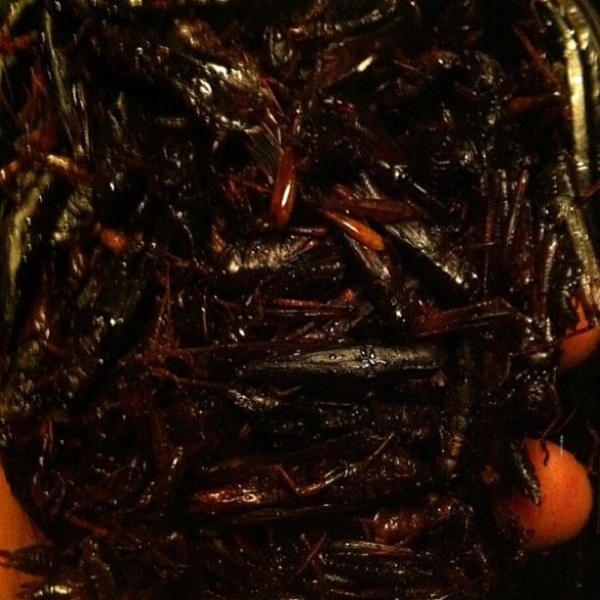 Luan Santana come gafanhotos fritos durante viagem ao Japão