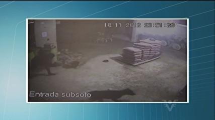 Imagens mostram grupo agredindo com pedaços de paus e furtando cães