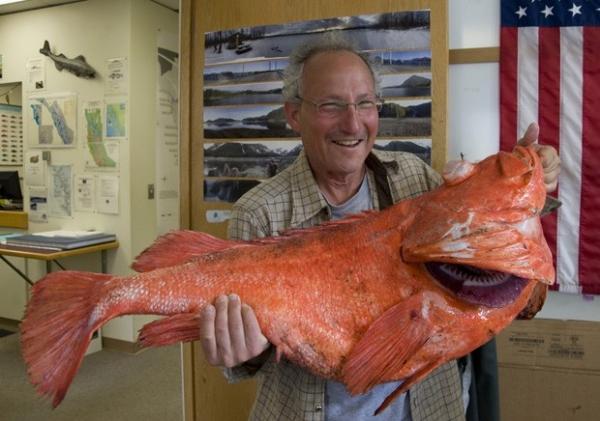 Pescador quebra recorde ao fisgar