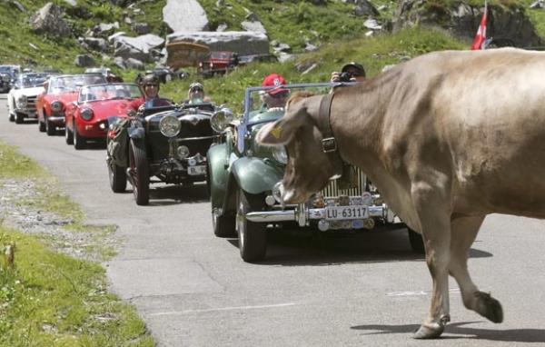 Vaca provoca congestionamento de carros antigos em estrada na Suíça