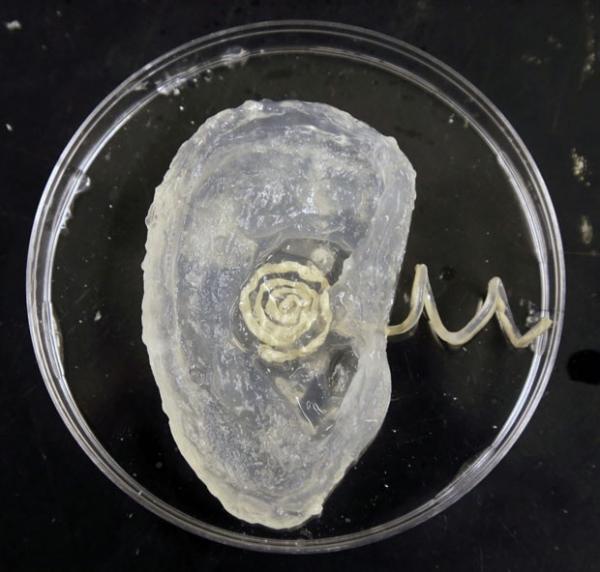 Cientistas criam orelha biônica com impressora 3D