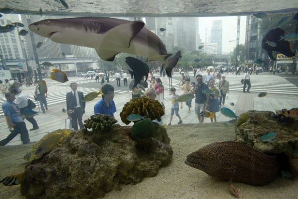 Aquário japonês leva tubarão para o meio da rua em Tóquio