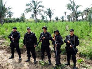 Polícia faz apreensão histórica de 2,5 toneladas de maconha no Piuaí