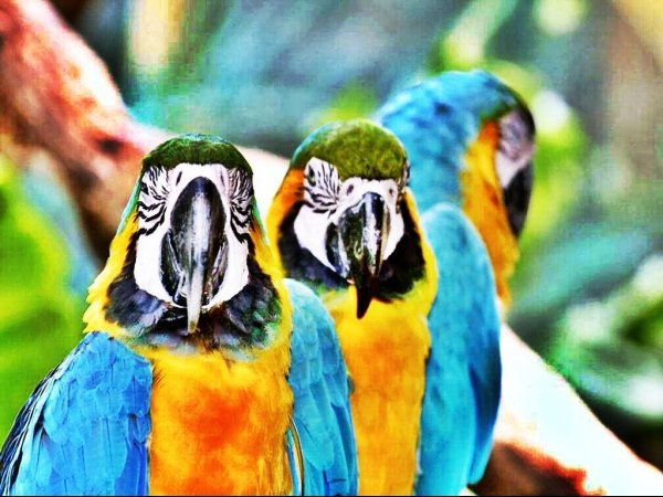 Incrível chama atenção  para cuidados com preservação e extinção das espécies