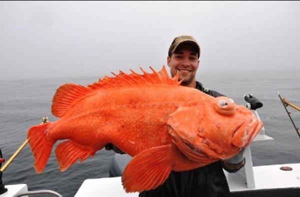 Americano bate recorde mundial ao fisgar um peixe esquisito de 18,4kg