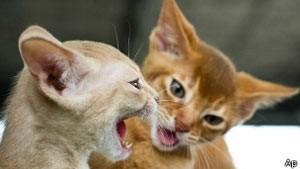Polícia britânica cria banco  de dados de DNA de gatos para solucionar crimes