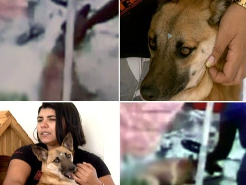 Vídeo mostra uma mulher espancando sua própria cadela no Rio de Janeiro