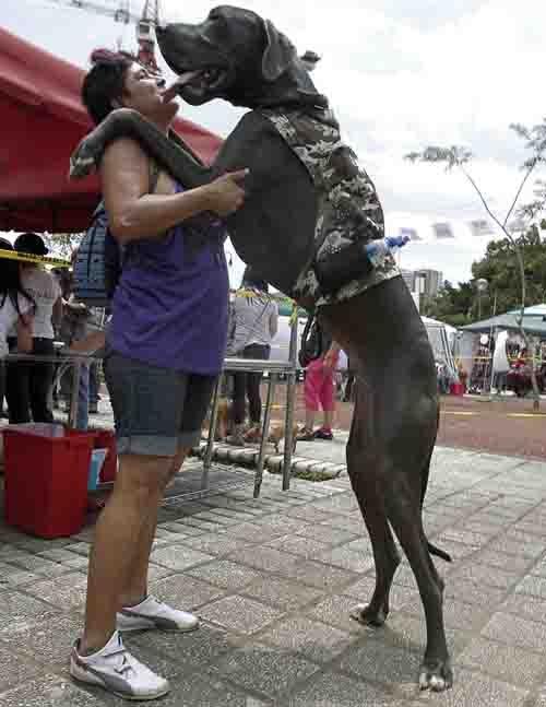 Mulher é flagrada com cão maior do que ela durante um protesto