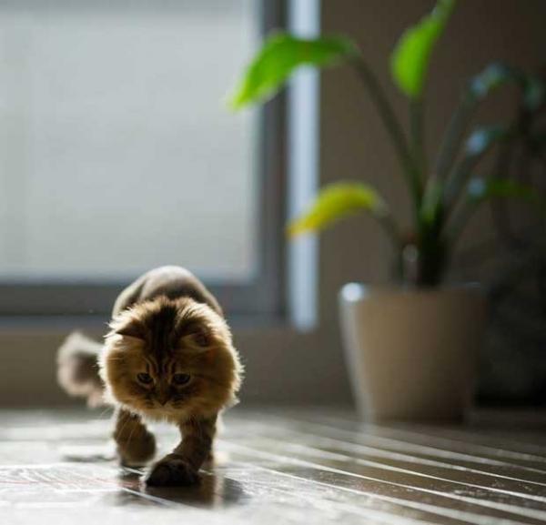 Gato assume