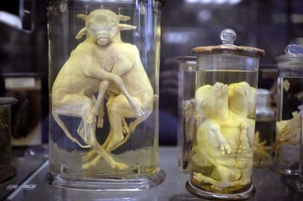 Museu francês guarda bichos bizarros para estudos de anatomia