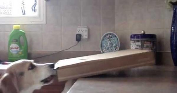 Homem põe câmera para pegar ladrão de pizza e flagra seu cão