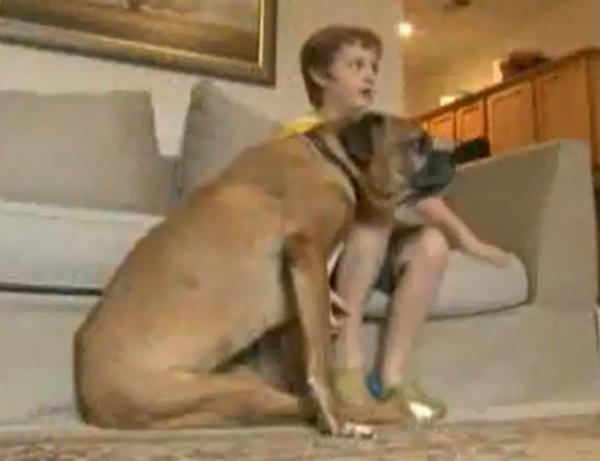 Menino de 8 anos arruma emprego para comprar cadeira de rodas para cão