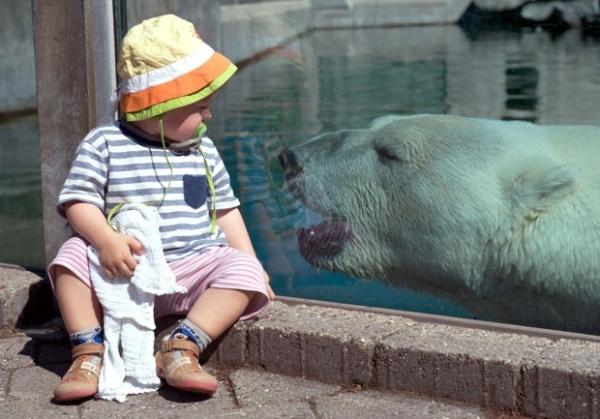 Separados por vidro, bebê e urso polar