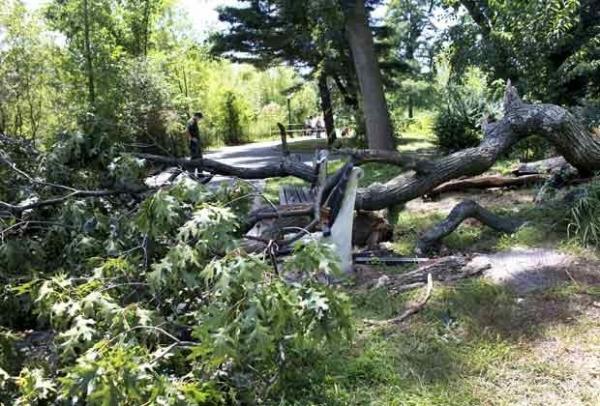 Árvore cai sobre banco e mata grávida em parque de Nova York
