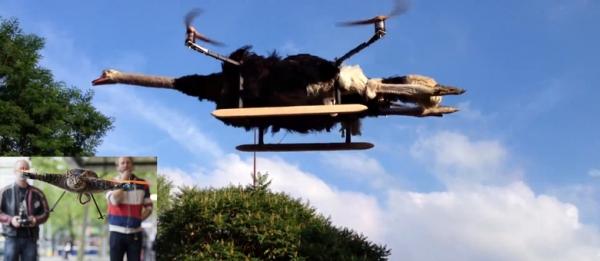 Holandeses constroem avestruz que voa como helicóptero
