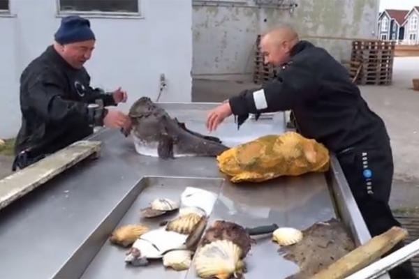 Vídeo de homem com a mão presa em boca de peixe-sapo vira hit na web