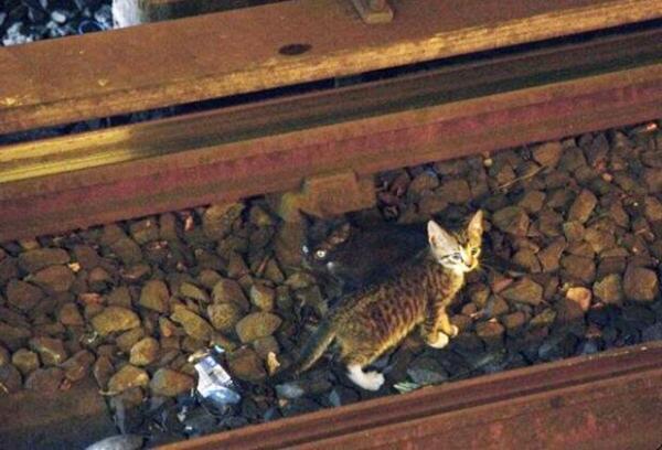 Gatinhos invadem trilhos e provocam atrasos de duas horas no metrô de NY