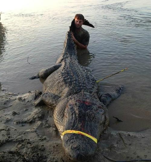 EUA: Grupo mata um jacaré de 336 quilos e bate novo recorde