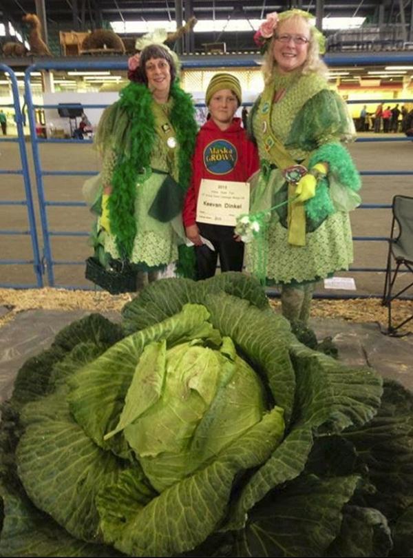 Garoto de 10 anos vence concurso com repolho gigante de 41 kg