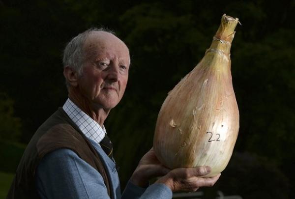 Abobrinha de 50,5 kg e cenoura de 6,5 kg faturam título em feira inglesa