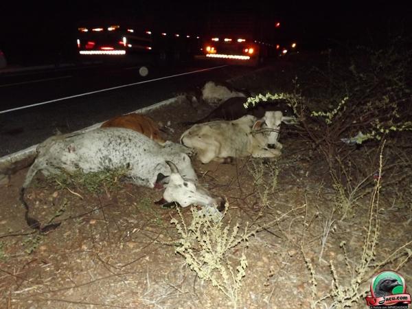 Caminhão atropela e mata 15 boninos em estrada no interior do Piauí