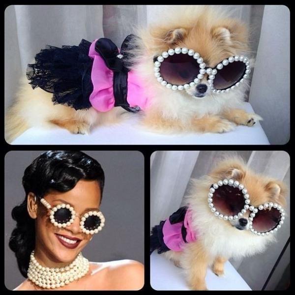 Karina Bacchi posta foto de sua cadela vestida de Rihanna