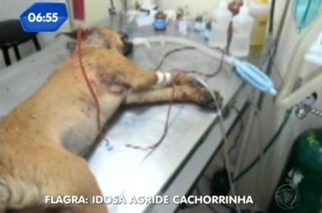 Cão morre após ser espancado pela dona em Santa Maria (RS)