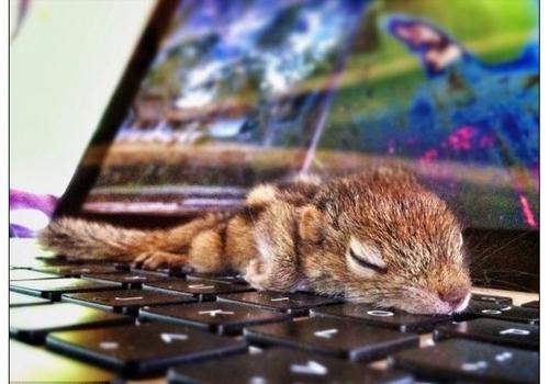 Hora do cochilo! Conheça o esquilo que dorme em qualquer lugar