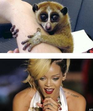 Foto de Rihanna com primata ameaçado causa polêmica e 2 prisões na Tailândia