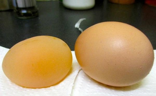 Galinha bota ovo sem casca e foto gera polêmica em rede social