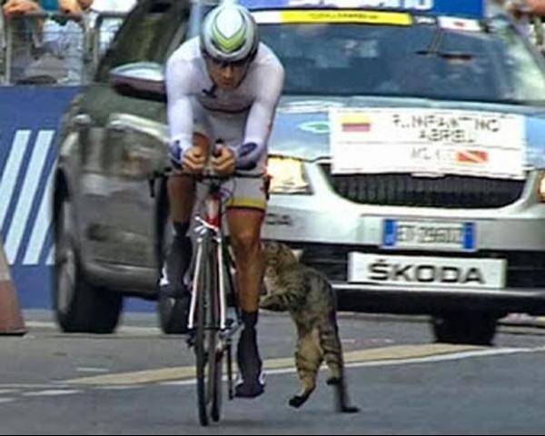 Câmera flagra gato atacando ciclista durante competição na Itália
