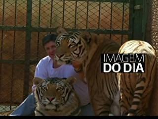 Família do Paraná luta na Justiça para manter nove tigres em casa