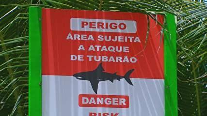 A gente já sabia que tinha ataque de tubarão