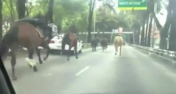 Cavalos fogem da polícia, invadem ruas e destroem carros no México