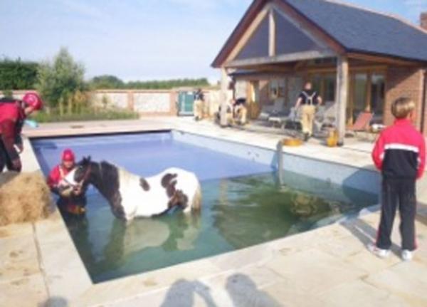 Pônei é resgatado após cair e ficar preso em piscina no Reino Unido