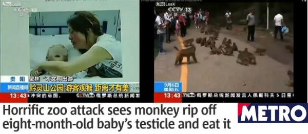 Macacos atacam bebê de oito meses e devoram seus testículos em zoológico chinês