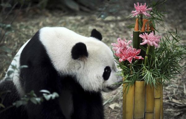 Pandas ganham