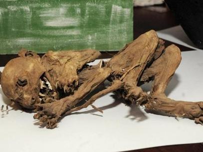 Família argentina exibe esqueleto que diz ser de um chupa-cabra